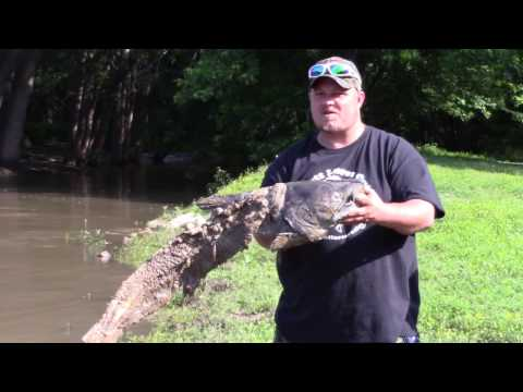 Dead catfish still moving? from YouTube · High Definition · Duration:  7 seconds  · 66 views · uploaded on 7/23/2016 · uploaded by Tyler Wood