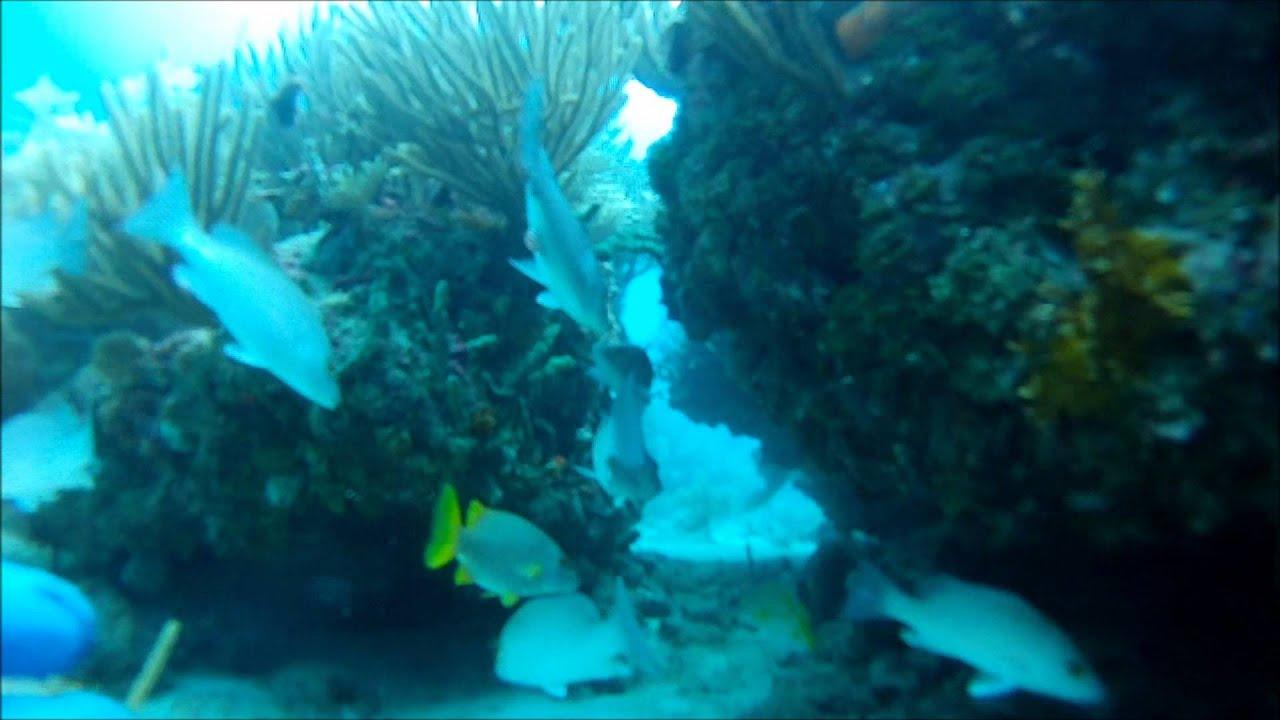 Snorkeling Looe Key 08/11