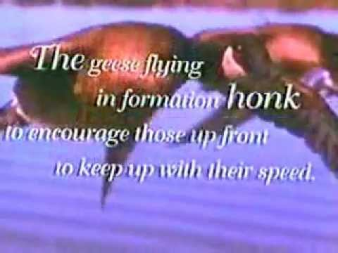 Lessons from Geese.wmv