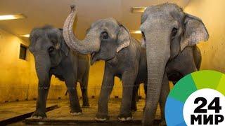 Они же не мамонты: в Новокузнецком цирке слоны замерзают на манеже - МИР 24