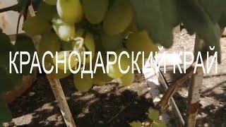 Домашний влог/На юге всё само растёт/Свой урожай/Переезд в Краснодар