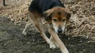 Spca, Bay Of Islands, Rex A Old Shelter Dog