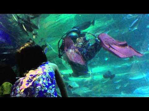 Aquaria KLCC (01695)
