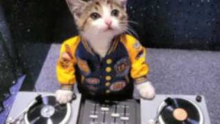 Bounce Little Kitty / House music