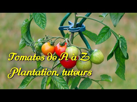 Tomatoes 1/3. Planting. Strengthen your tutors.