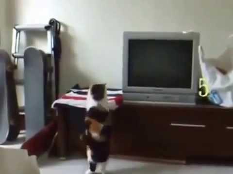Крысиные бега (2001) смотреть онлайн или скачать фильм