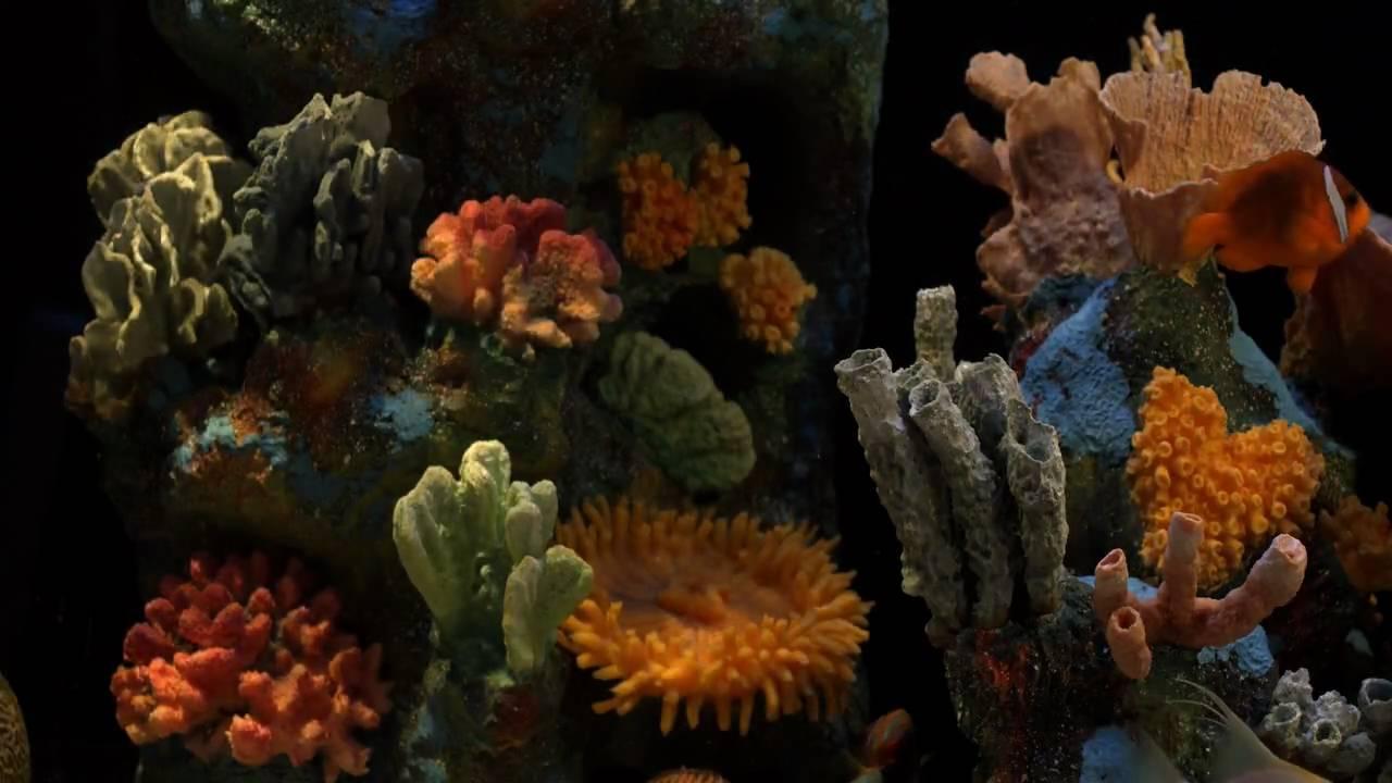 Aquarium natural sounds youtube for Spacearium aquariums