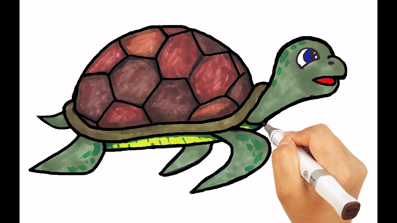 How To Draw Turtle Drawing With Colored Markers Learn Names For