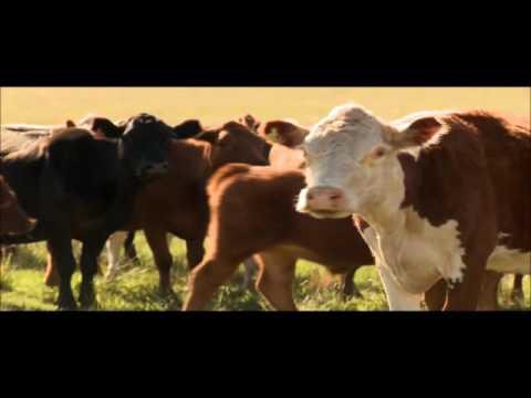 Uruguay beef