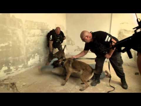 1 - Служебные собаки / Моя Планета