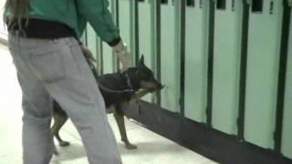 Www.shutetraining.com, Guelph Dog Trainer Jason Shute ,locker Search Detection