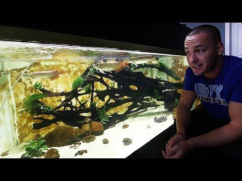 Dragon Fish Update!