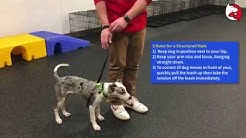 Puppy Class Lesson: Stopping Leash Pulling with a Martingale Collar