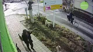 Бомж Леший продолжает пугать в Анапе жителей своим видом и сворой собак #АНАПА2018