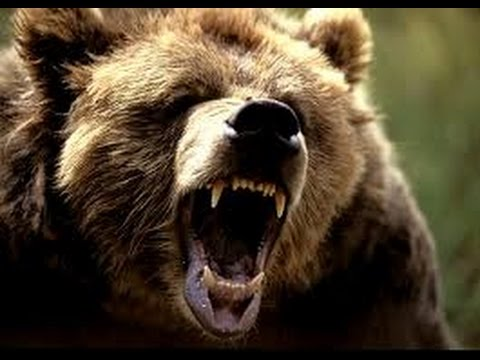 National Geographic Predator CSI Bodiless Bears