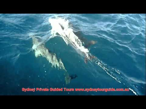 Dolphin Watching & Sailing Cruise in Port Stephens (Nelsons Bay)