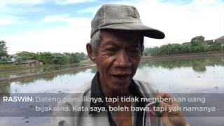 Geger! Warga Joglo, Jakarta Barat Tangkap Buaya di Sawah