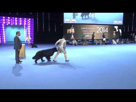 Junior handling World Championship final 2014
