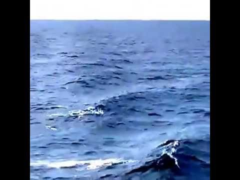 Dolphins in Aegean sea