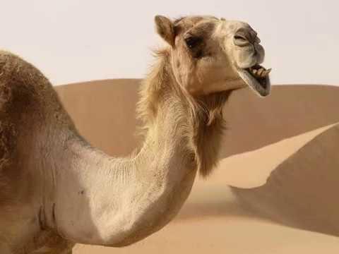 Yo sere tu camello Zenkito y JD (2013)