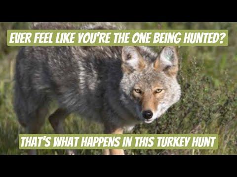 West Virginia turkey hunt ends by being stalked
