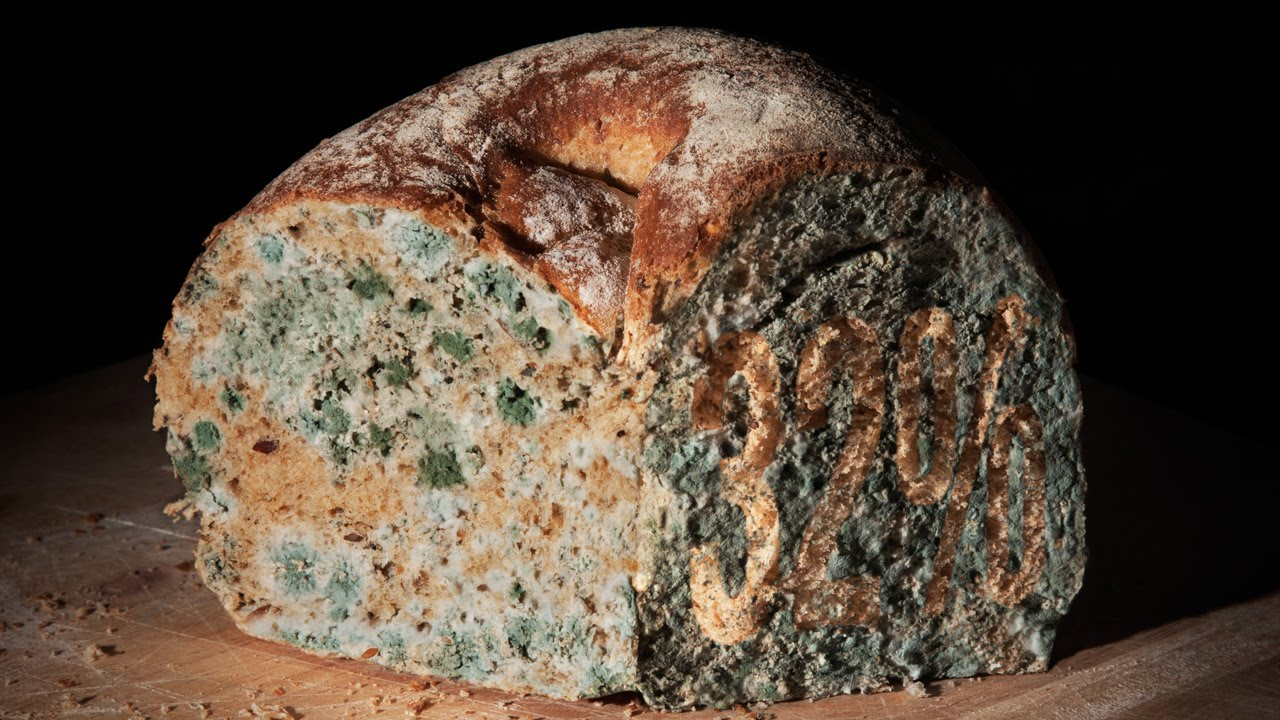 mouldy bread The basic danger of eating moldy bread is developing a stomach ache or an allergic reaction to the mold  what are the dangers of eating moldy bread a.