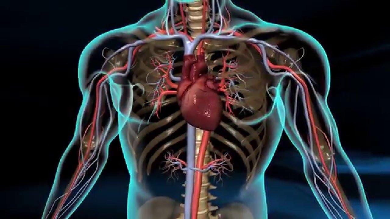 3d Cardiac Catheterization A Medical Demonstration Youtube