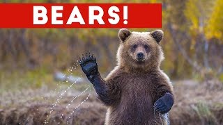Download Funniest Cute Bear Video Compilation 2016 | Funny Pet Videos Mp3 and Videos