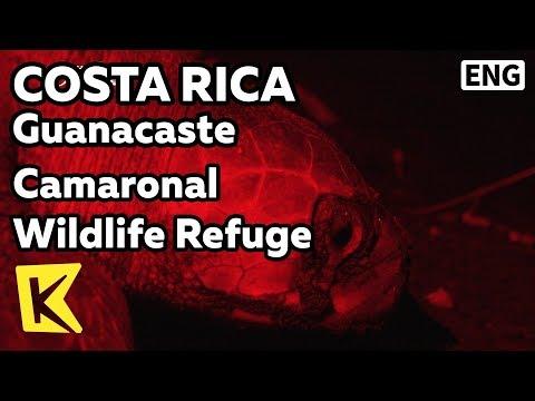 【K】Costa Rica Travel-Guanacaste[코스타리카 여행-과나카스테]까마로날 야생동물 보호소/Camaronal Wildlife Refuge/Sea turtle