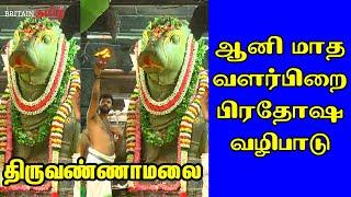 Thiruvannamalai | ஆனி மாத வளர்பிறை பிரதோஷ வழிபாடு திருவண்ணாமலை | Britain Tamil Bhakthi