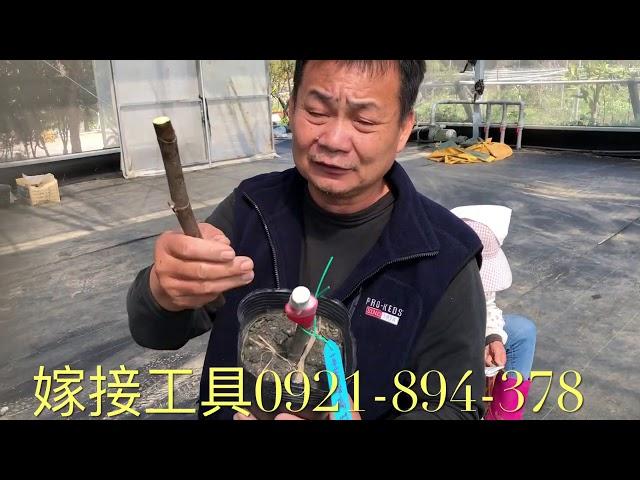 無花果各種果樹嫁接工具介紹 0921-894-378戴先生
