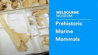 Discover Documentary #6   Prehistoric Marine Mammals
