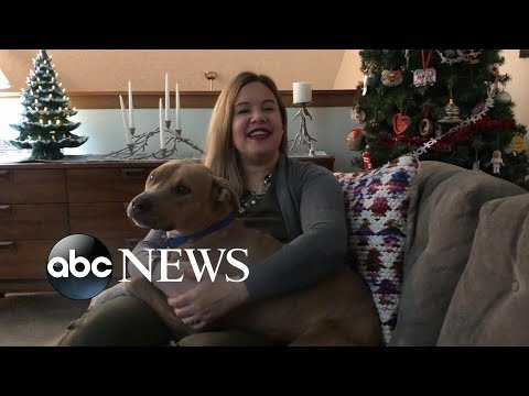 """Nard - Ohio Shelter's """"Holiday Sleepover"""" Program Helps Dogs Find Forever Homes"""