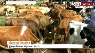 SC order on Interim Stay to CG's Beef Restriction increases Cow sales | Polimer News