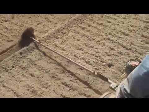 посадка картофеля в фермерском хозяйстве КФХ Хлопцев Рязанской области