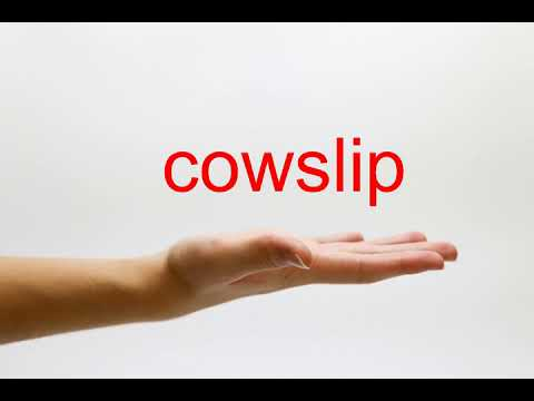 How to Pronounce cowslip  American English