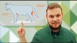 Техника постановки внутримышечной инъекции кошкам и собакам