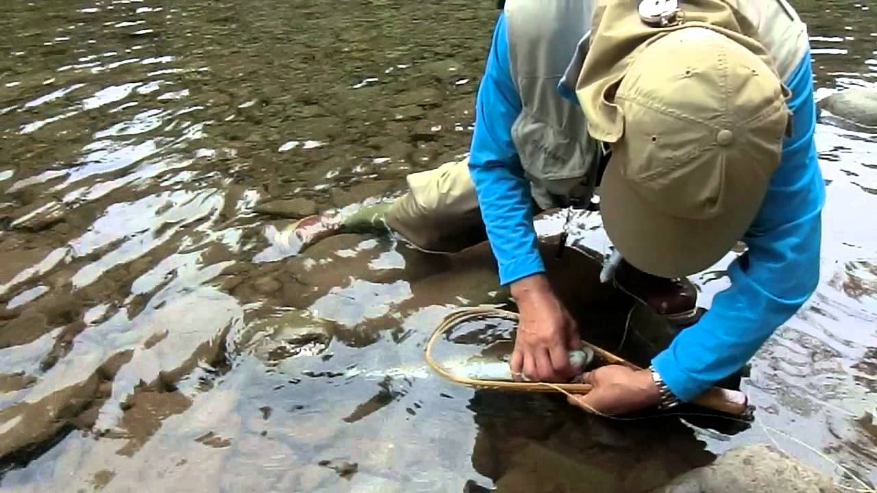 Rainbow trout at beaverkill river ny fly fishing youtube for Roscoe ny fishing