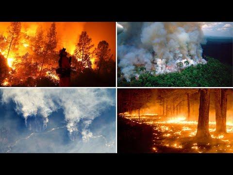 Deadly Amazon rainforest