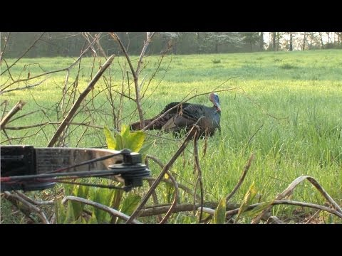 CNTV-Crossbow Turkey Hunting, Southern Style