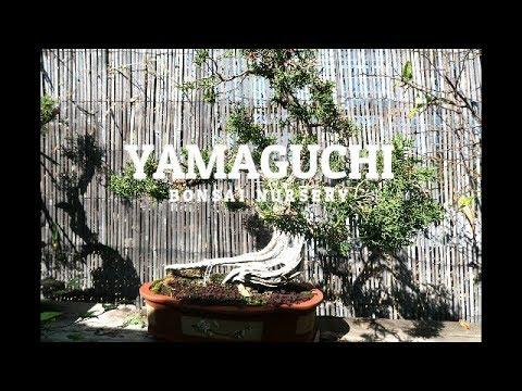 Yamaguchi Bonsai Nursery | Los Angeles, California | Our Vist and Tour