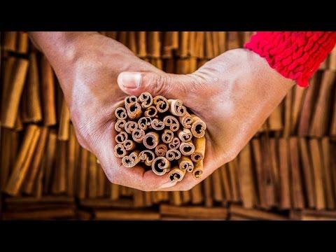 Cinnamon: Harvesting Cassia in the Jungles of Sumatra