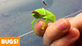 Amazing Insects | Funny Pet Videos