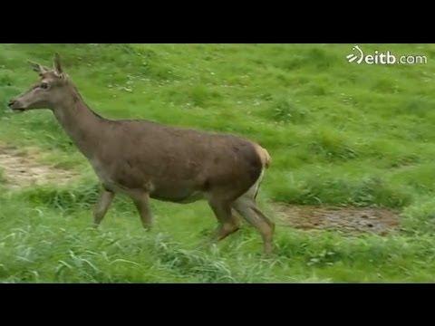 Centro de recuperación de fauna silvestre de Bizkaia