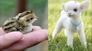 Funny Animals Compilation Cutest Animals Ever 2019