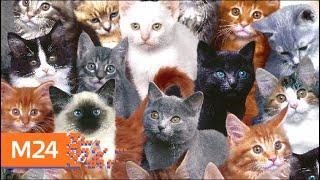 В России 1 марта отмечают День кошек - Москва 24