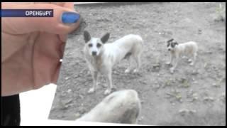 В Оренбурге застрелили бездомную собаку (Охота на собак)