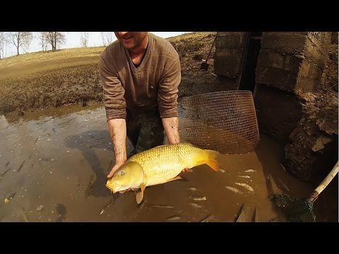 ловля прудовой рыбы