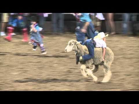 Spanish Fork Rodeo mutton busting