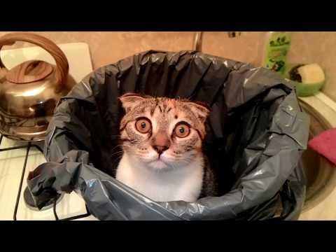 Житель Барнаула написал на кота заявление в полицию